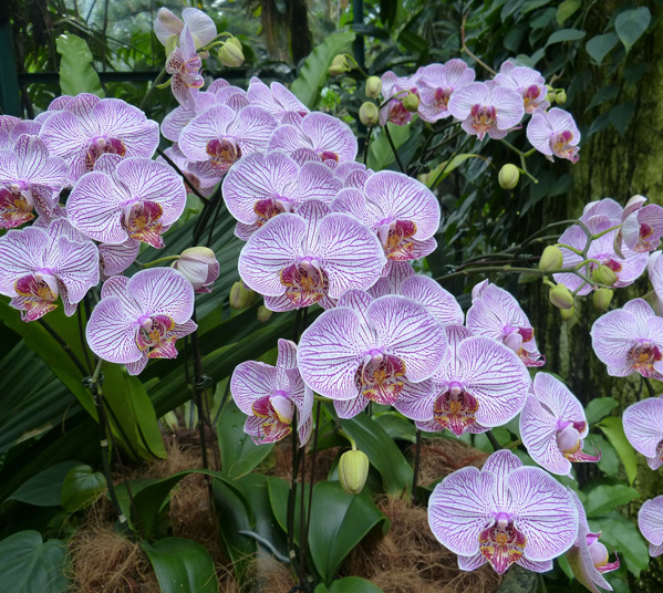 Women's Travel Club Singapore & Malaysia - National Orchid Garden